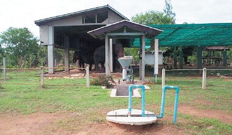 Various biogas production system | Department of Alternative Energy
